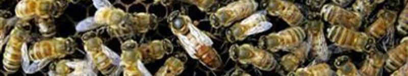 mehiläistarhaajan ammattitutkinto haapajärvi